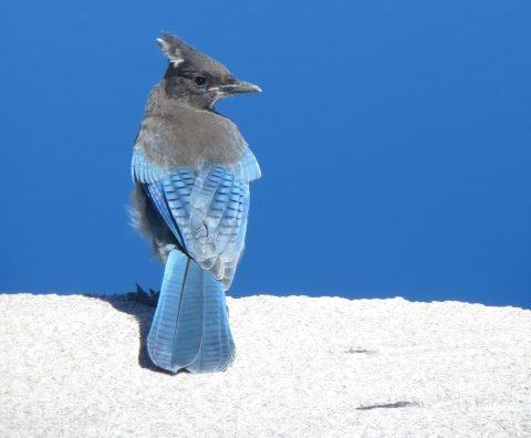 童話「青い鳥」から学ぶ幸せな結婚